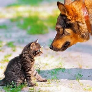 Domenii web pentru site-uri de animale